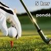 Hrajte golf 5x měsíčně na 29 hřištích kdykoliv až do konce roku jen za 8390 Kč